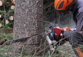Trabajador Forestal
